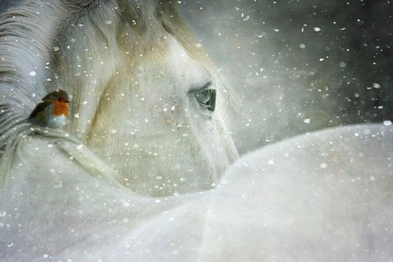 white magick love spells